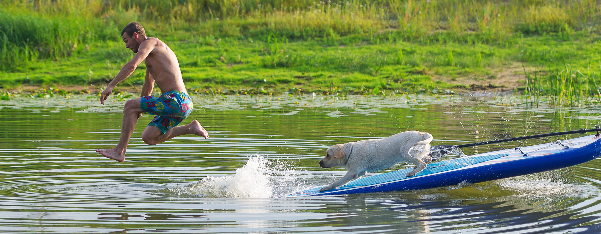 sommerurlaub-hund